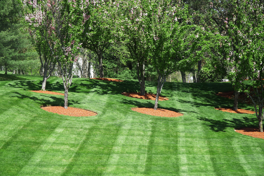 lawn care in Minnetonka MN
